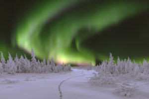 Winter night landscape with forest and polar northern lights